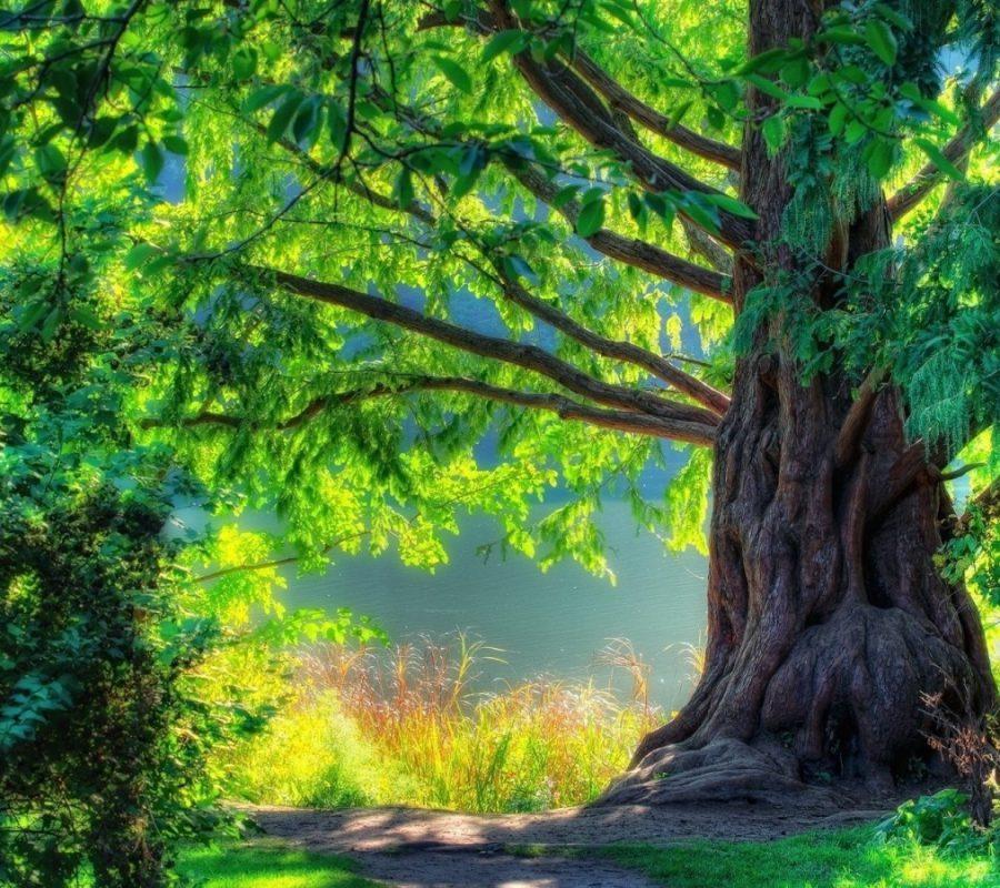 Summer-Tree-1440x900
